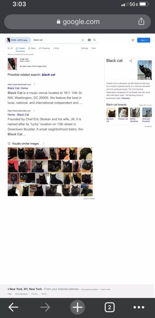 如何在Google上反向搜索图片以查找与特定照片相关的信息