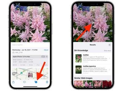 iOS 15:如何在照片中使用视觉查找来识别地标、植物和宠物